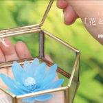 個展のお知らせ「花と絵と、私」at MOUNT tokyo 2018.8.9-8.12